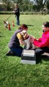 dog training in Lincs